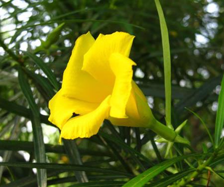 Kaner plants plant vatika zoom mightylinksfo